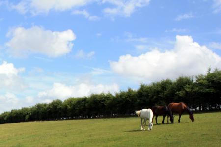 Equestrian Planning | Patrick Durr Associates